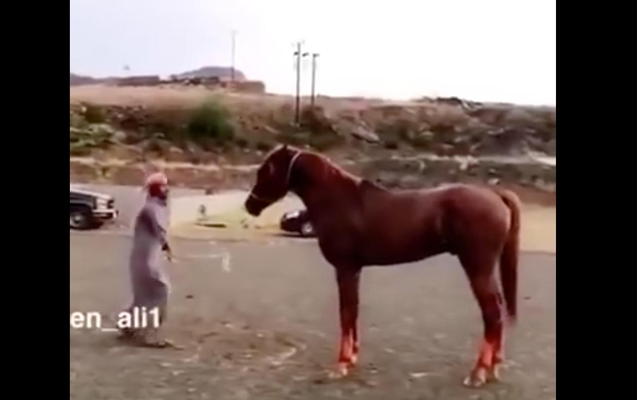 حصان غاضب