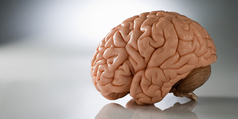 شكل دماغك
