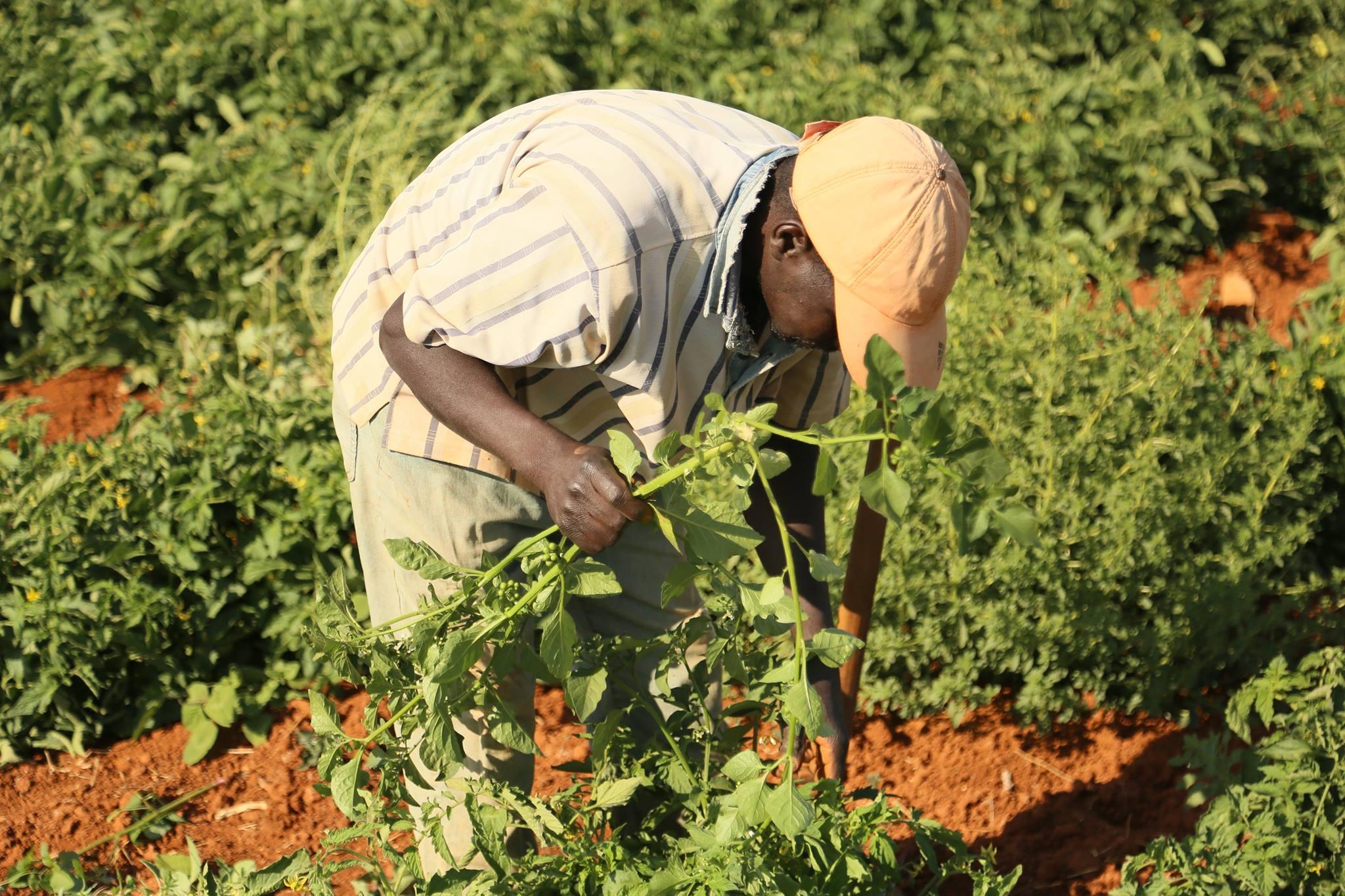 الزراعة والثروة الحيوانية