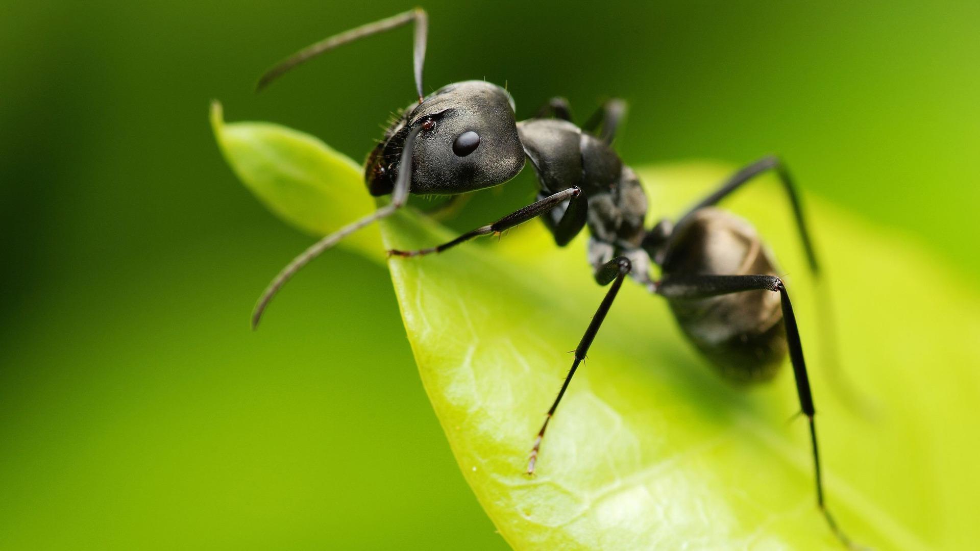 صورة (GPS) طبيعي في النمل.. يعرف المواقع ويُحدّد الاتجاهات. إقرأ