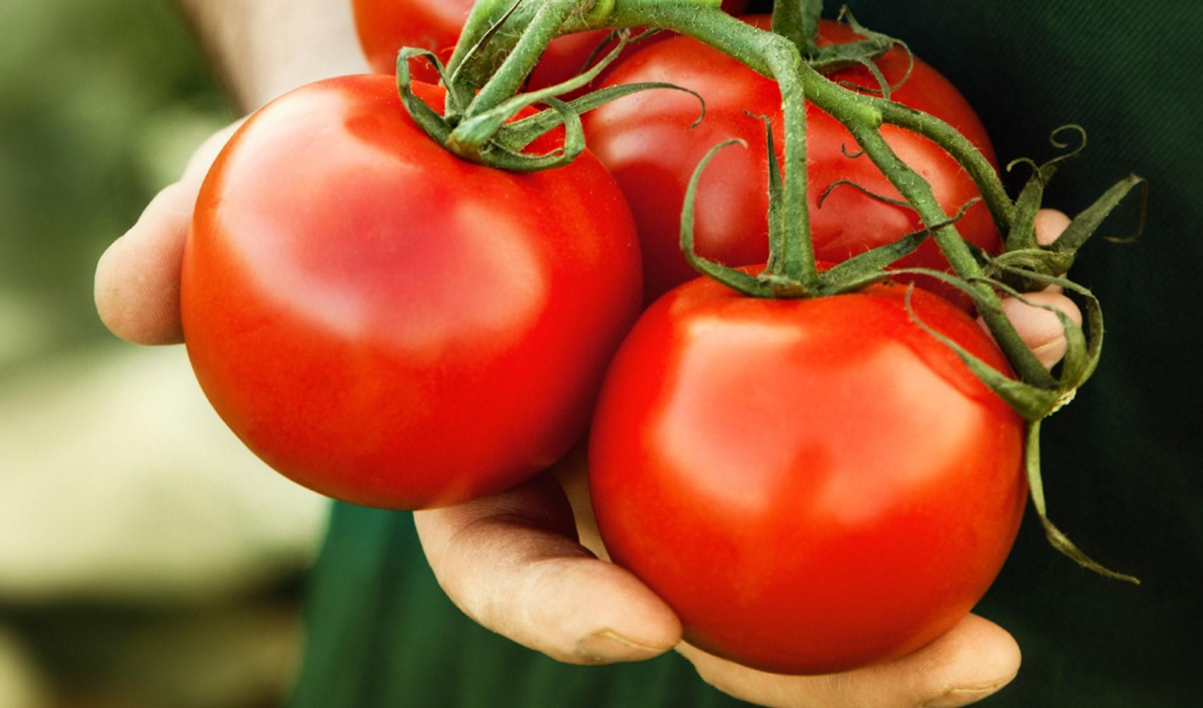 """Photo of """"الطماطم الفضائية"""" في طريقها إليك.. لا تقلق ولا تستغرب"""