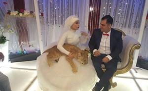 """مصرية تواجه """"القطة المذبوحة"""" بـ""""أسد"""" في حفل زفافها"""