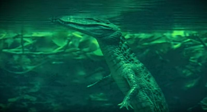 Photo of فيديو مُذهل.. أفعى ضحمة تلتهم تمساحا بالكامل