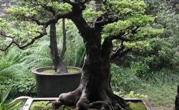 شجرة بمليون دولار