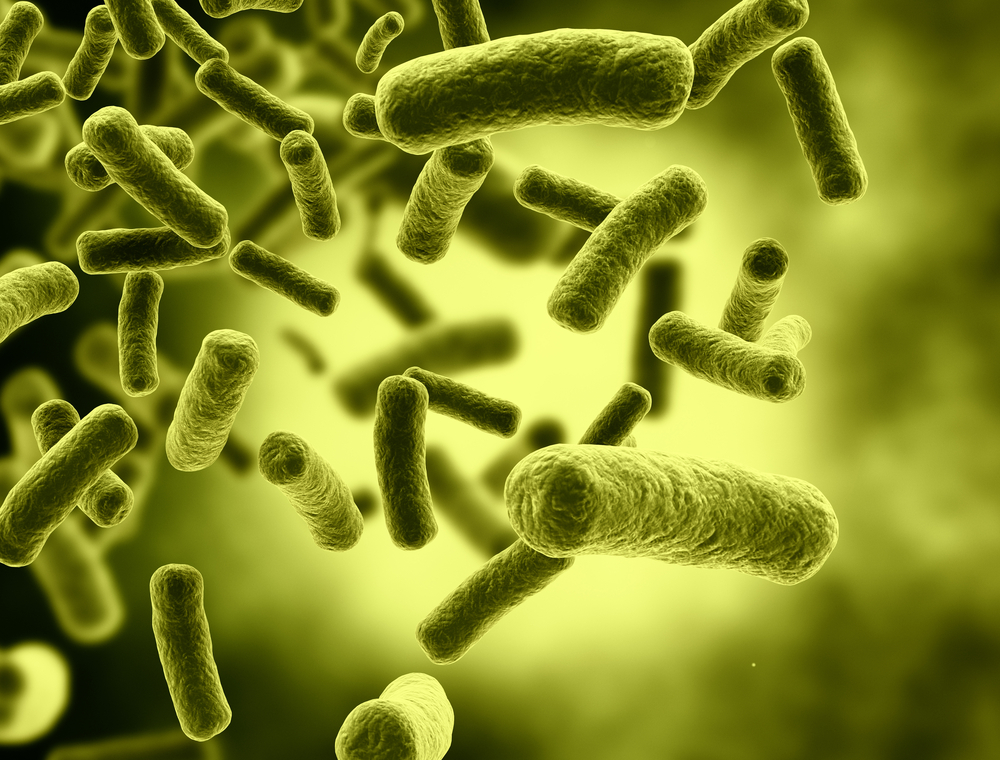 البكتيريا الصيادة