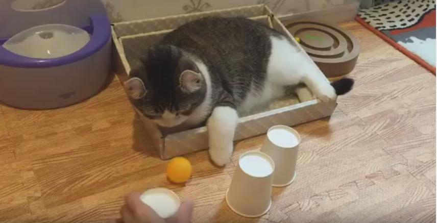 قطا ذكيا