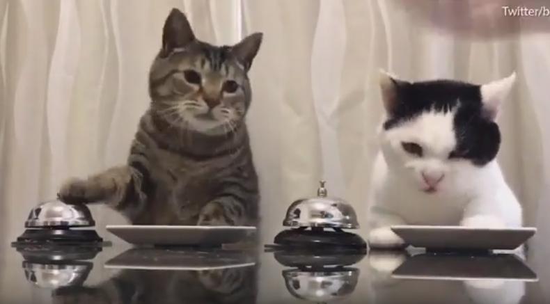 """Photo of ليس خيالا.. قطتان """"تقرعان الجرس"""" لطلب الطعام.. شاهد"""