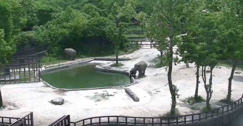 عملية إنقاذ فريدة لفيل سقط في بركة