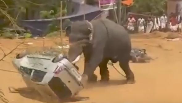 Photo of فيل غاضب يحطّم السيارات وينشر الرعب.. شاهد