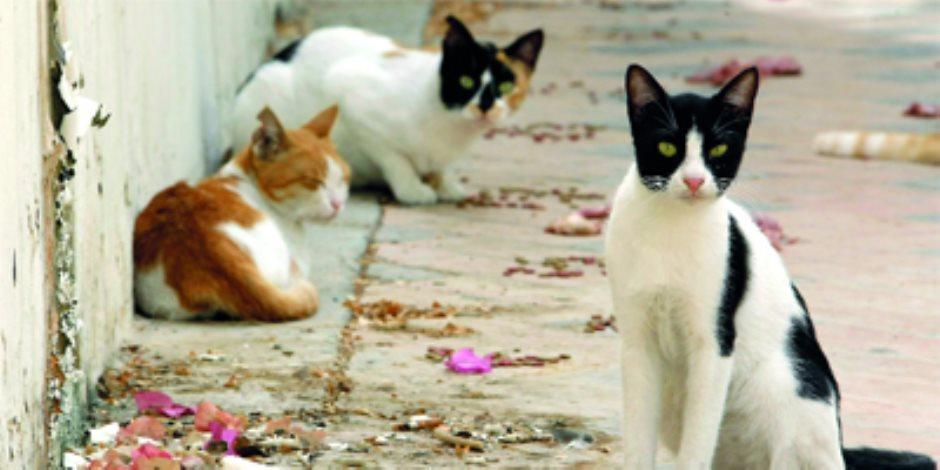 """Photo of قرية كاملة تسكنها """"القطط"""".. هل تعرف أين تقع؟"""