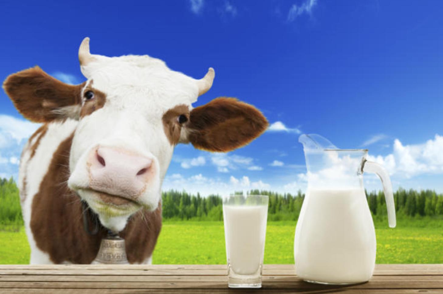 Photo of حليب الأبقار مسؤول عن طول قامة الأطفال؟. إقرأ لتعرف