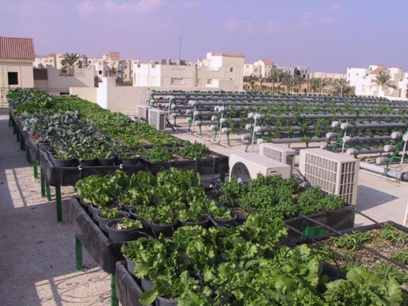 الزراعة فوق السطح