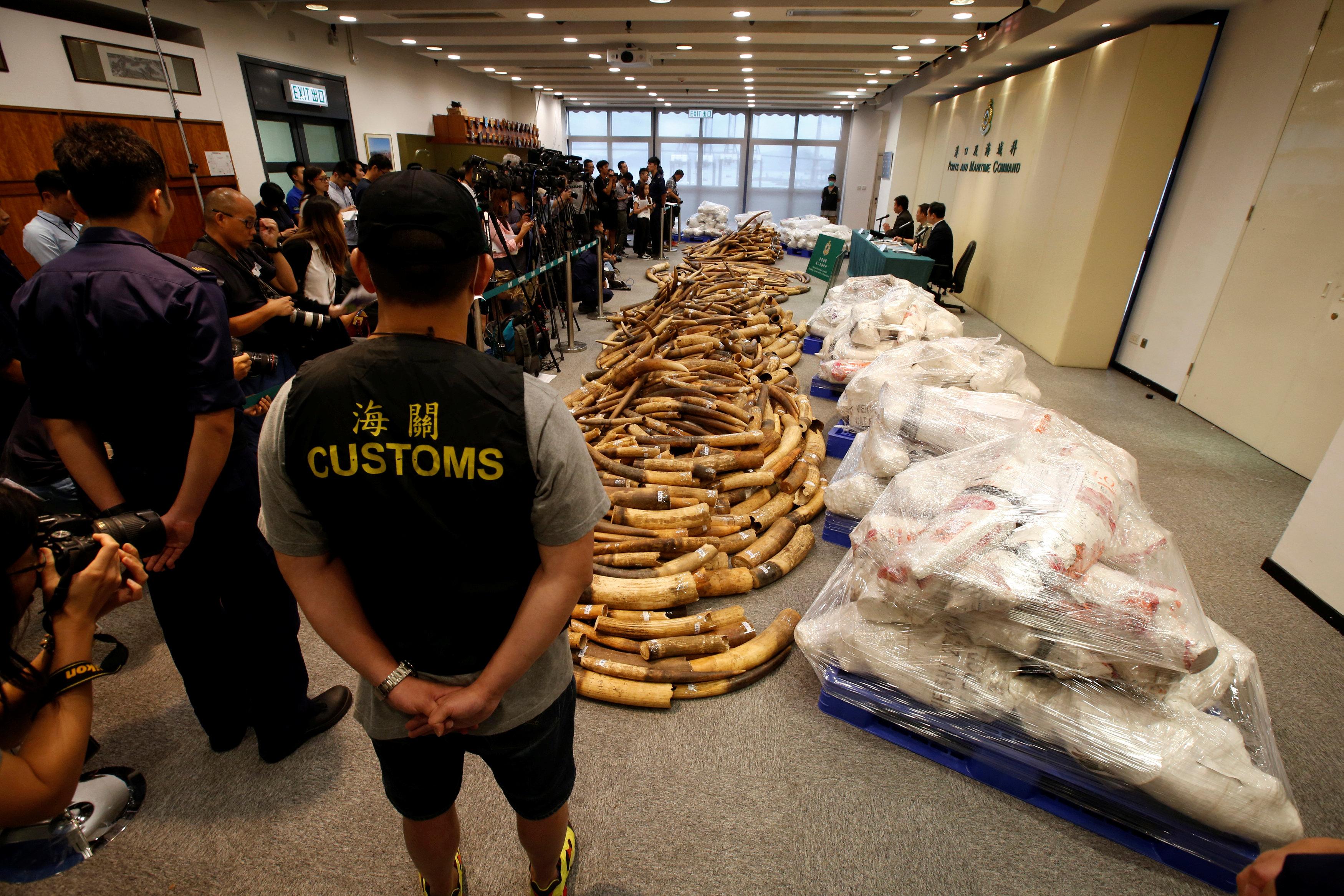 هونج كونج تحبط تهريب أكبر شحنة عاج منذ أكثر من 30 عاما