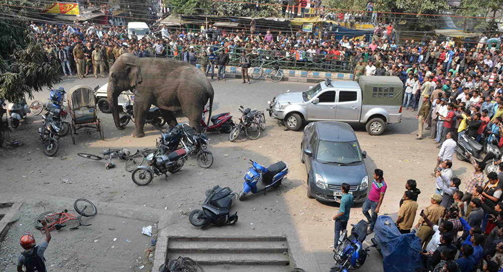 Photo of إطلاق الرصاص على فيل تسبب في سقوط 15 قتيلا
