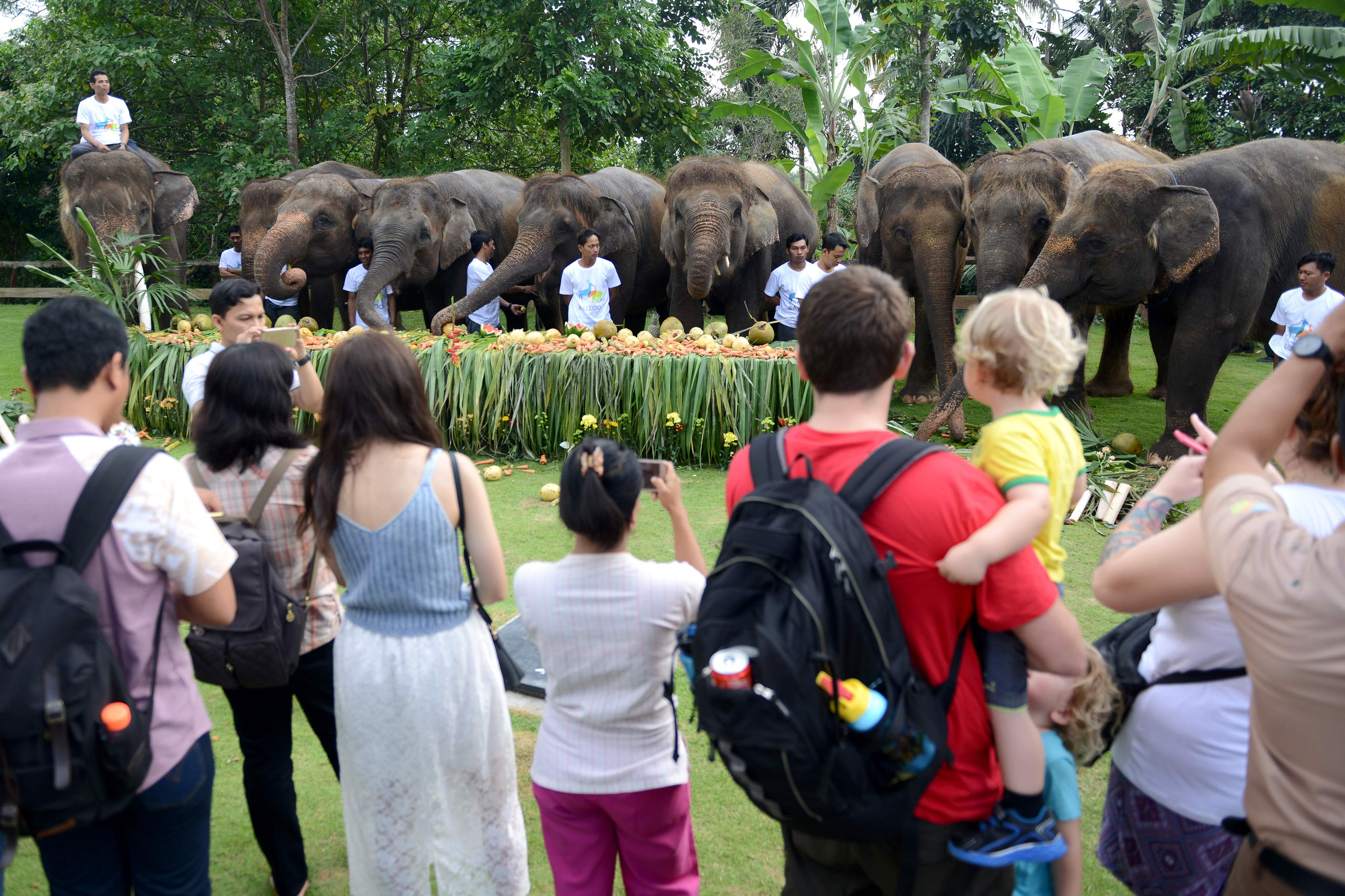 أفيال تساعد في إنقاذ مئات السائحين