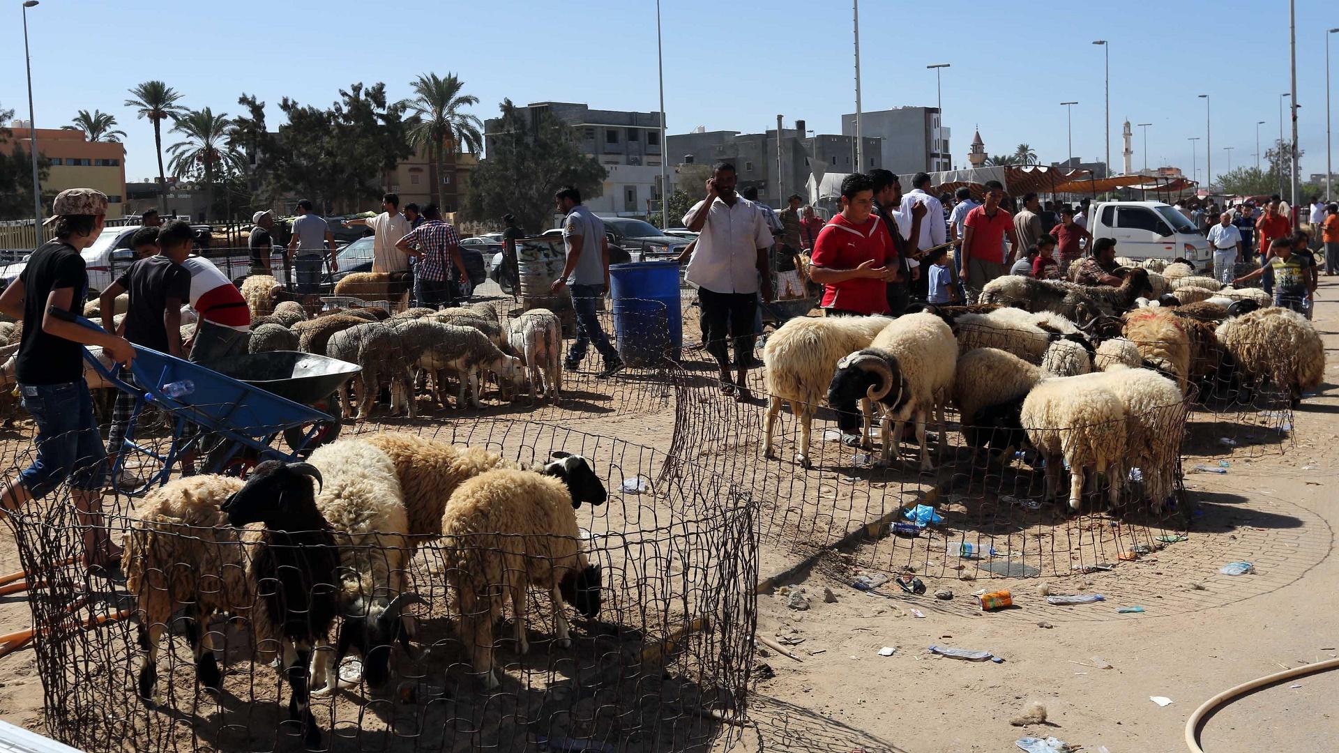الاضاحي ليبيا