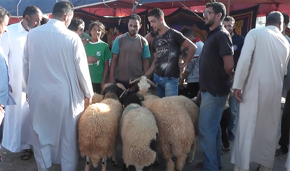 الأسعار مضاعفة في سوق الأضاحي بمدينة البيضاء