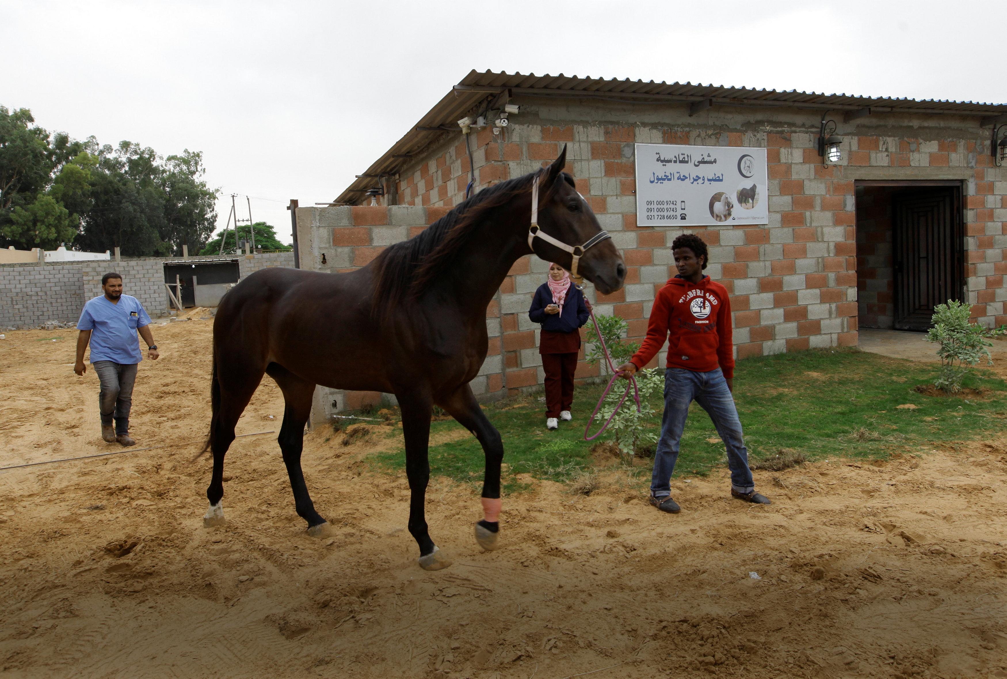 خيول ليبيا