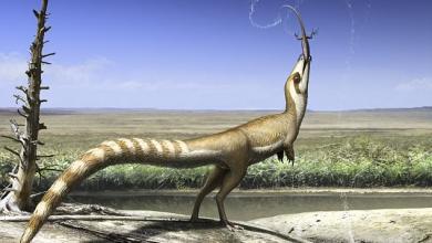 ديناصور يغطيه الريش