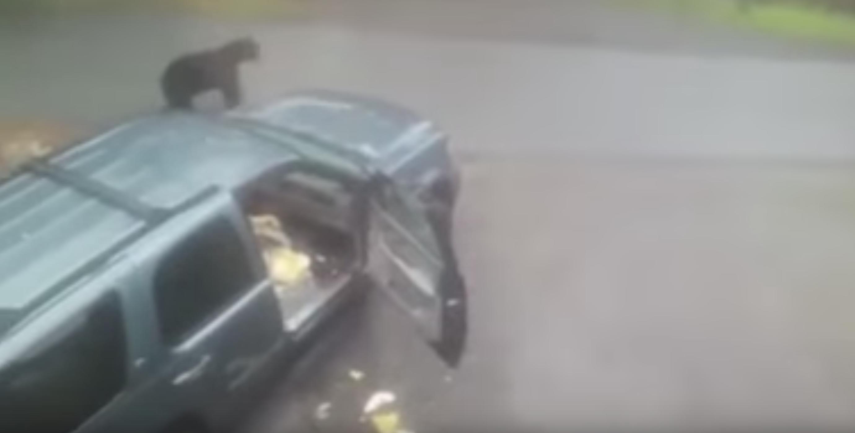 Photo of أميركي يصاب بحالة هلع من دبين وأسد في سيارته.. فيديو