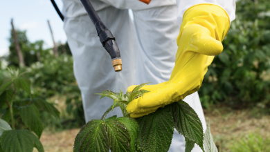 Photo of أفضل وسيلة للتخلص من المبيدات الحشرية.. غسل التفاح بمحلول الصوديوم