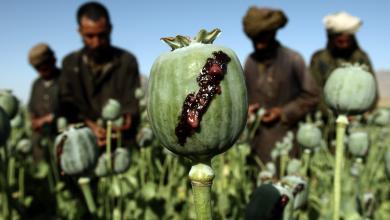 "Photo of قوات أمريكية وأفغانية تهاجم ""مخدرات طالبان"""