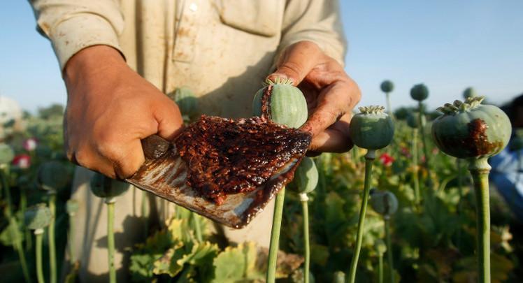 إنتاج الأفيون في أفغانستان