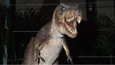 معدن قضى على الديناصورات أمل البشرية في علاج السرطان!