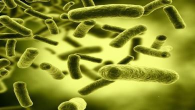 البكتريا المعوية