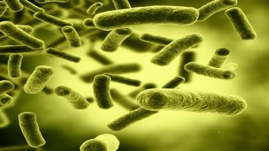 Photo of بحث: البكتريا المعوية المفيدة قد تساعد في علاج السرطان