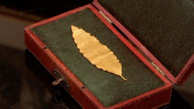 ورقة غار ذهبية من تاج نابليون بونابرت