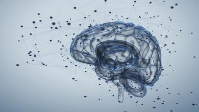 Photo of دماغ الإنسان لا يموت مع صاحبه.. اقرأ أكثر