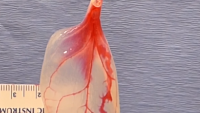 """صورة قلب مصنوع من """"السبانخ""""!"""