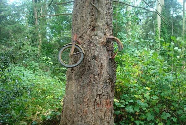 الفتى الذي ربط دراجاته بالشجرة