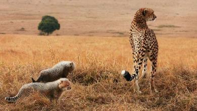 صورة الحيوانات المُهدّدة بالانقراض تجتذب عدسة مُصوّر. شاهد