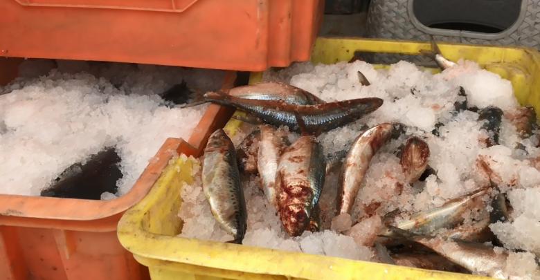 جهاز الحرس البلدي فرع غات تضبط أسماك فاسدة