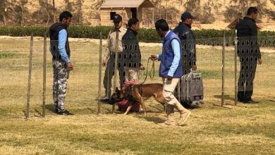 إدارة تدريب كلاب الأمن والحراسة بأكاديمية الشرطة المصرية