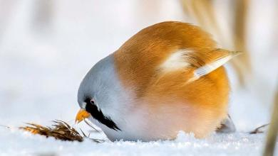 Photo of طيور الألعاب في البرية.. شاهد الصور