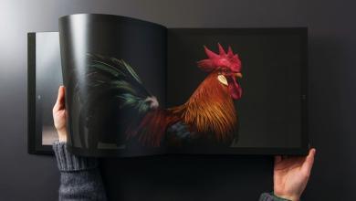 Photo of كتاب عن أجمل الدجاج في العالم