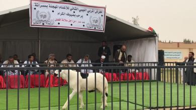 معرض المربي الليبي للأغنام المُهجّنة