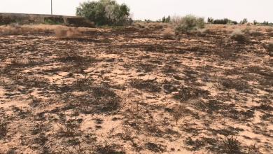 حريق يلتهم 3 مزارع في بدر
