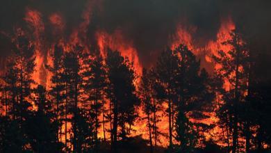 حرائق في الغابة (صورة ارشيفية )