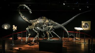 متحف ديناصورات