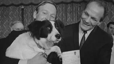 الكلب بيكيلز الذي عثر على كأس العالم