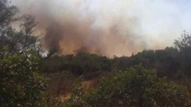 Photo of إنقاذ غابات الجبل من حريقين