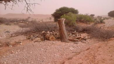 Photo of التخريب يطال الحياة البرية في ليبيا