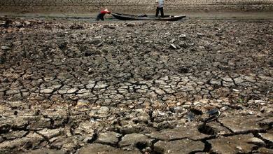 Photo of موجة جفاف تملأ منطقة صينية بالفئران