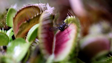 النباتات الآكلة للحوم