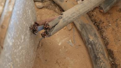 Photo of خارجون عن القانون يسرقون خط كهرباء في الجفارة