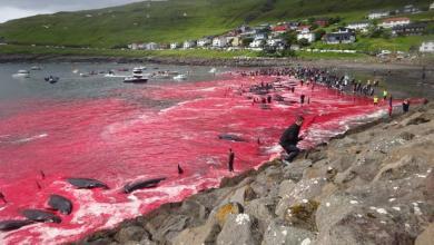 """Photo of """"إعدام جماعي"""" يصبغ شواطئ الأطلسي بالدم"""